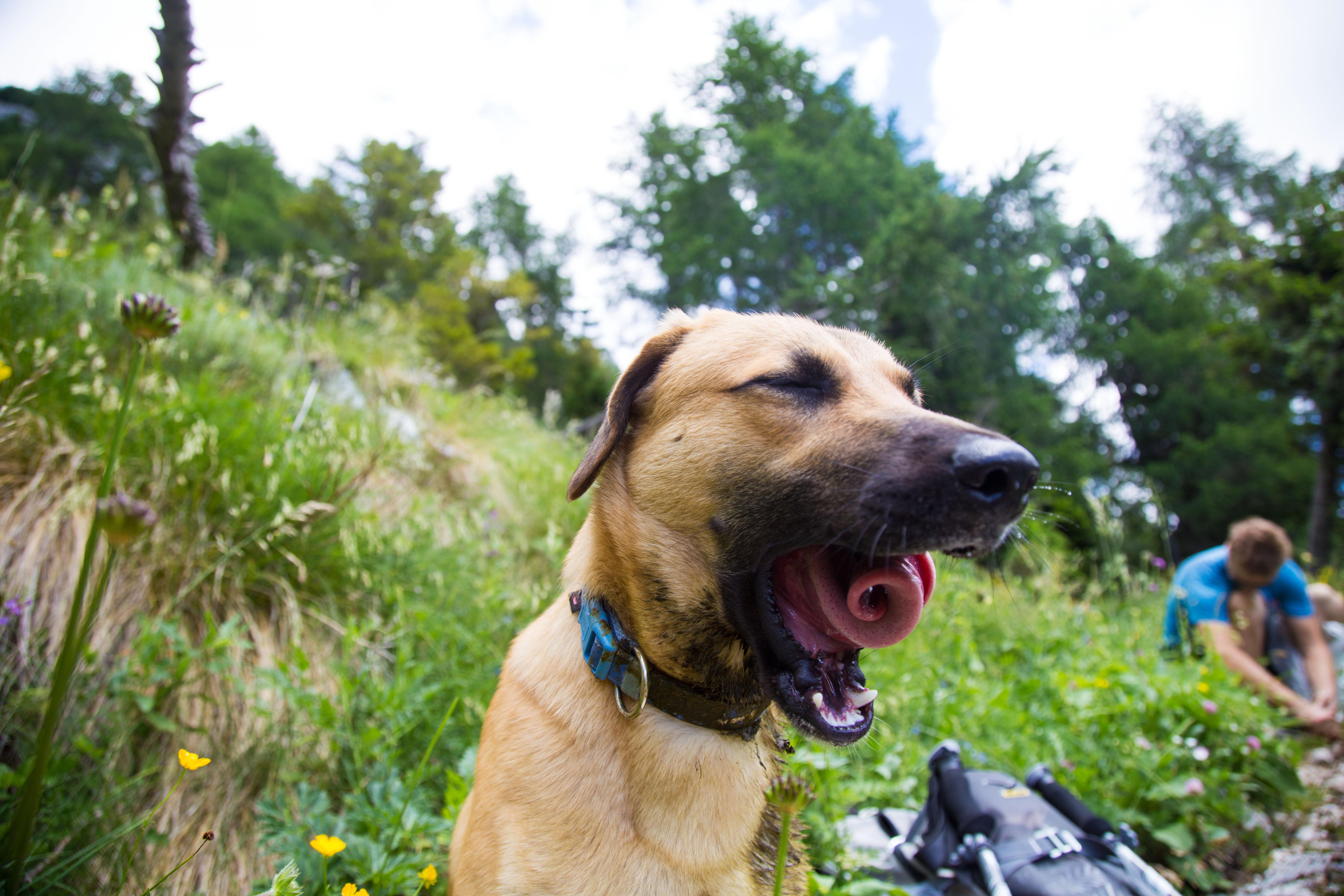Giorgino: the story of a rescue dog