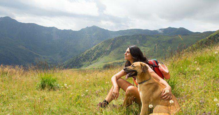 Trekking stupendo dal Passo di Monte Croce Carnico al Marinelli e notte in rifugio con il cane | Vacanze in Carnia ep. 1