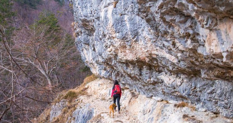 Trekking dal ponte del rio Simon verso il ricovero Sot Cretis lungo il CAI 425a | Chiusaforte