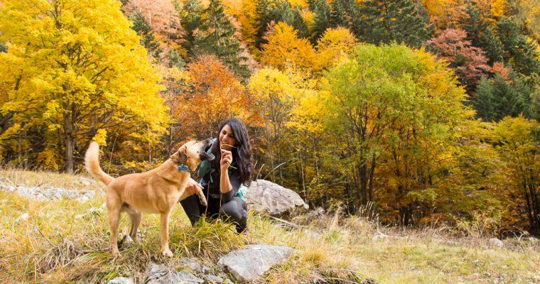 Camminata stupenda lungo la Val Fleons fino al passo Giogo Veranis | Pierabech