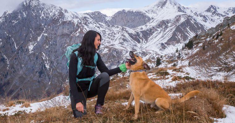 Camminata facile da malga Pramosio al monte Paularo | Paluzza